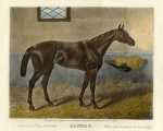 'Hannah' the champion filly of Mayer de Rothschild (1818-1874)