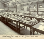 Produce from the Rothschild estate at Aston Clinton at the Ayslesbury Cottagers' Show in 1899.