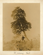 One of the photographs taken on Forrest's expeditions to China